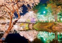 日本三大夜桜の一つに数えられる、高田城百万人観桜会