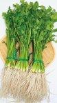 三関せり:白く長い根が特徴。きりたんぽ鍋に使われるのは、まさに湯沢のせり