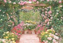 藤、イルミネーションの次なる高付加価値として位置づけるバラ。花壇一つひとつの芸術性を高め、世界レベルを目指す