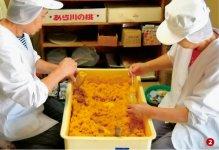 アレンジメニューも豊富な「生からすみ」を、工場で製造
