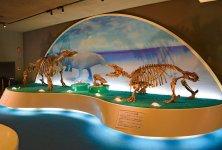 化石のまち 化石博物館・デスモスチルスの頭骨の化石が世界で初めて瑞浪市で発見された