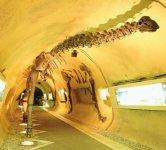 地下壕を利用した地下ミュージアム「地球回廊」でも恐竜に合える