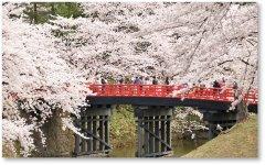 さくらまつり:第1回観桜会から今年で100回目となる弘前さくらまつり。