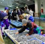 キビナゴは夜が明けるころ、魚市場に水揚げされ競りにかけられる