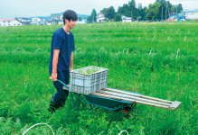 成熟スイカは、1つ1つ両手で収穫しなければならないが、BWEエキス用のスイカならリヤカーを使って収穫もスムーズ