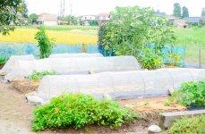 自宅前の自家菜園で、自身も無農薬野菜を栽培している
