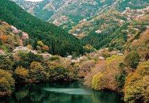 山桜賞「ダム湖の春」