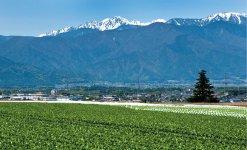 塩尻市ではレタスなどの高原野菜のほか果樹も多く栽培している