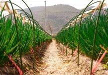 子会社の日本農産が生産したネギとレモンを、うどんのトッピングとして提供