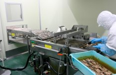 フライ工程では、食材をベルトコンベアにのせて次々と揚げていく