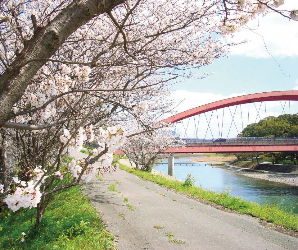 船小屋橋が架かる矢部川沿いには緑が広がり、春は桜景色が楽しめる