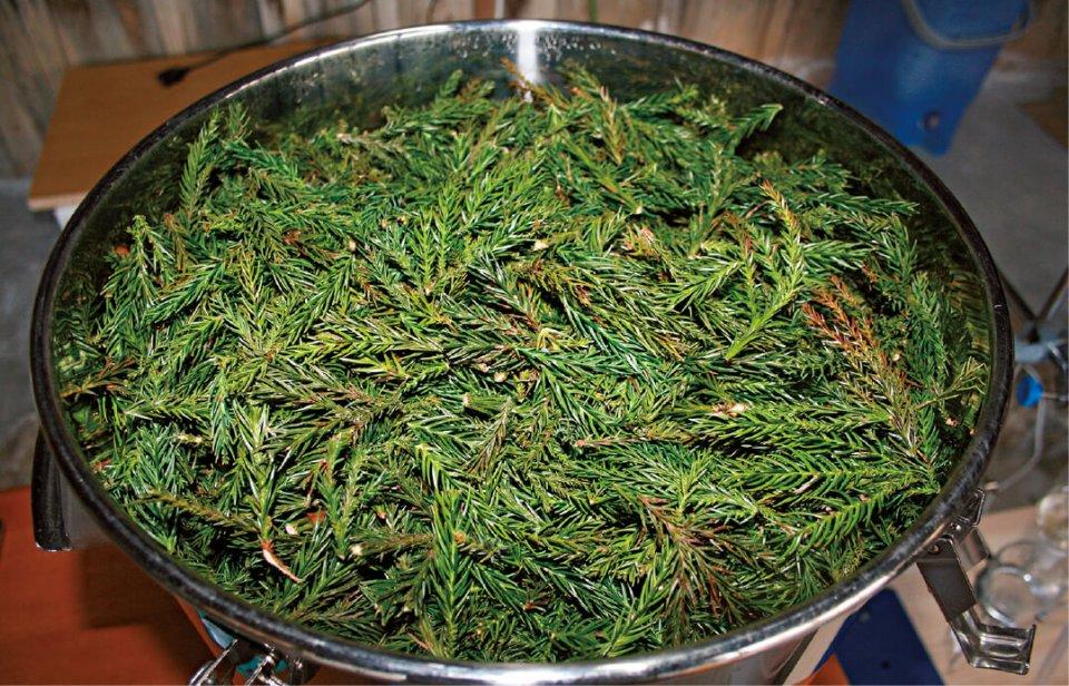 伐採後、間伐材は2週間ほど置いた後、抽出に入る。「スギの枝葉も原料に使っています。その場合は、枝葉2.5kgを専用の釜で熱すると20㎖ほどのオイルが抽出できます」(堀さん)