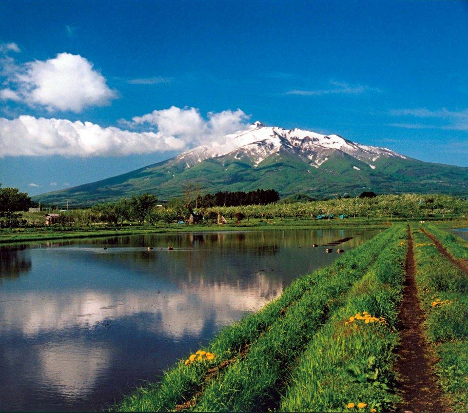 岩木山とリンゴ畑 写真提供:弘前市役所