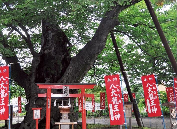 秩父今宮神社にあるご神木。「ハート型のくぼみがある」と話題で、これを見つけられると恋愛が成就するとか……