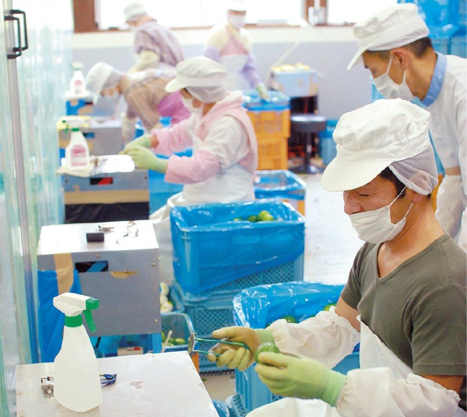 ゆずすこは、宮崎県東米良産の香り高いゆずを丁寧に手むきしてつくられている。機械の摩擦熱で、せっかくの香りを損なわないようにするためだ