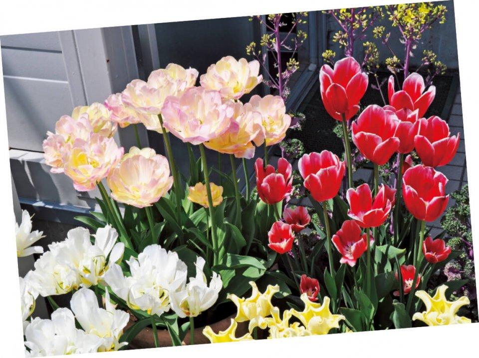 新津は花のまちとして有名。日本で好まれる花と、モンゴルで好まれるものは大きく異なるが、片岡さんは「かなりわかってきた」と笑顔を見せる