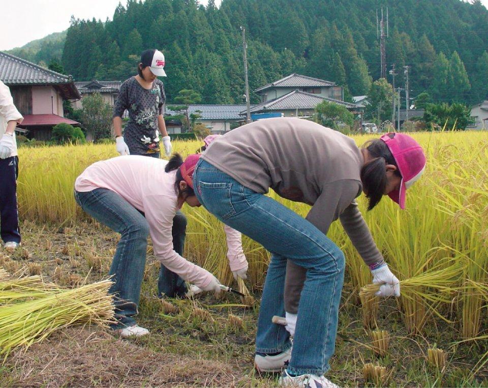 農林業体験では稲刈りを体験。農家に田植えから刈り取りまでの苦労話も聞く