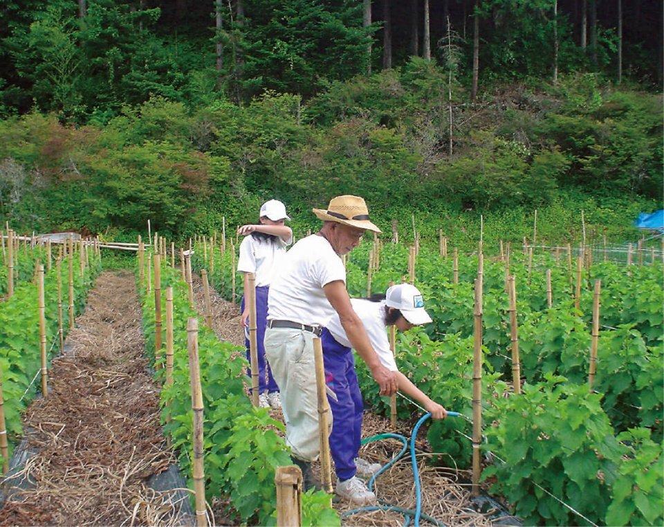 農山村交流・田舎の生活体験では生徒たちが民泊と畑作業などを体験する