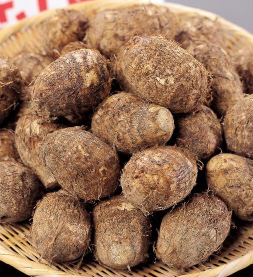 特産品の「二子さといも」。北上地域のみで約300年前から伝わる固有の里芋。強い粘り気とコク、なめらかな食感が特徴