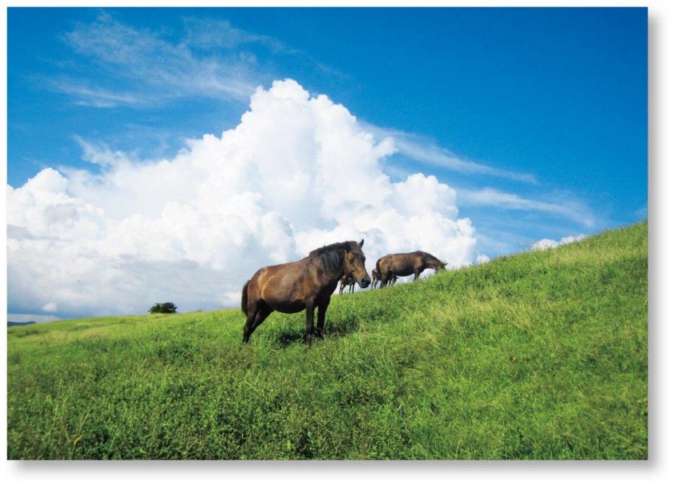 日向灘と志布志湾を分ける都井岬にいる日本在来種の野生馬。今は国の天然記念物に指定されている