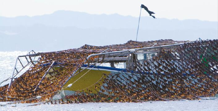 木更津名産のノリの収穫風景