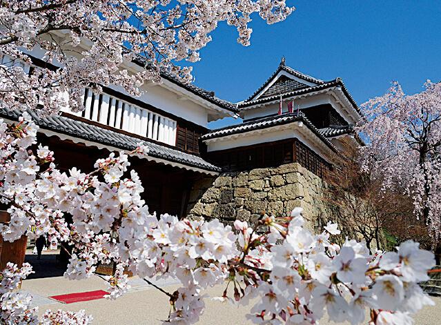 上田城と桜。「上田城千本桜まつり」(4月)における上田城に咲き誇る千本桜は圧巻。多くの観光客を楽しませてくれる