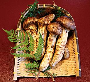 県内でも有数の松茸の産地である上田。年により異なるが、9月下旬から10月にかけて贅沢な香りを楽しめる