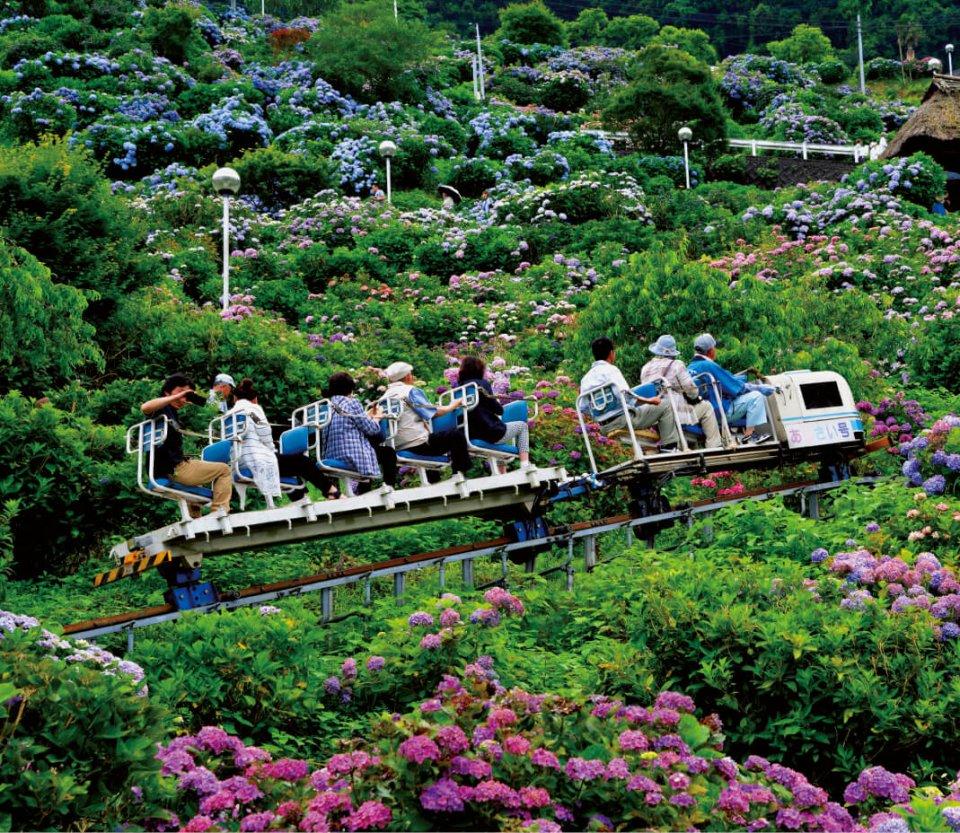 あじさいの里:本市新宮町にある。約4haの山の斜面に約2万株のあじさいが咲き誇る名所