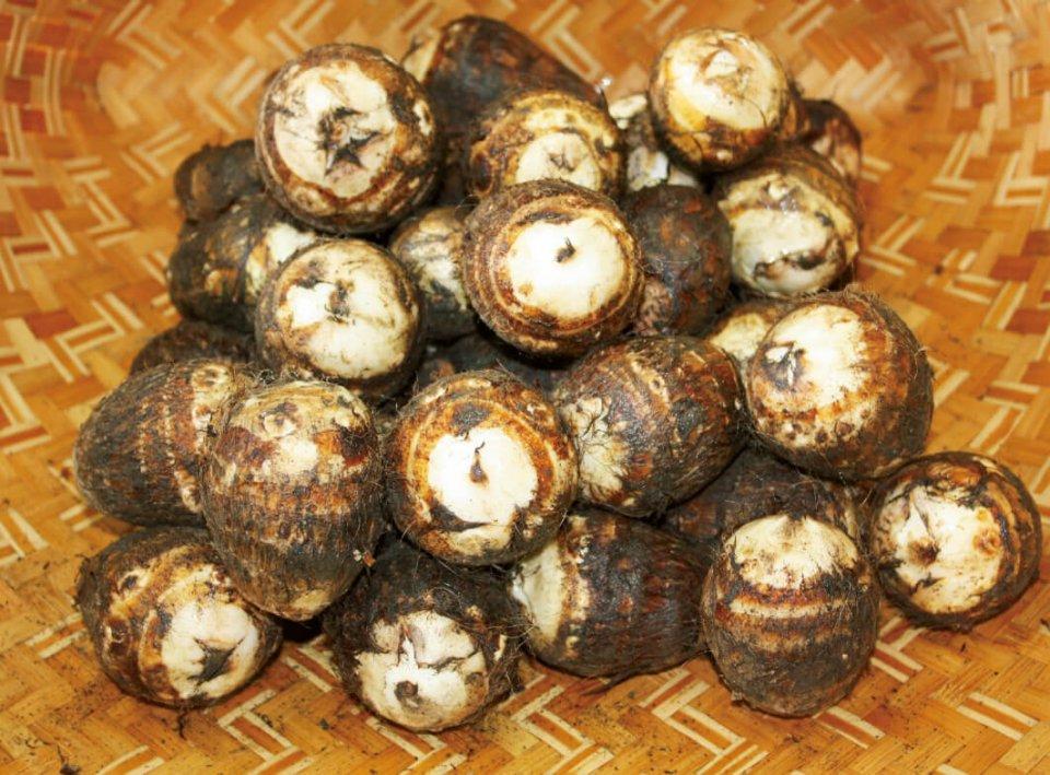 里芋:日本三大局地風「やまじ」にも強く、江戸時代から栽培されている特産物