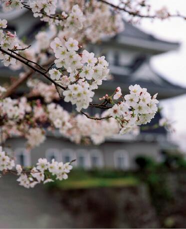四季折々の風景を楽しめる五島市。どれも絵になる ©清瀧会頭