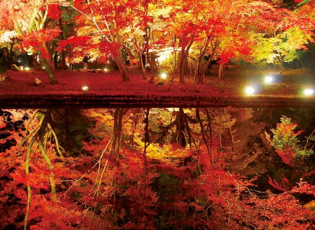 曽木公園ライトアップ:大小8つの池周辺がライトアップされ、もみじが水面に映る「逆さもみじ」は幻想的で神秘的な美しさ(毎年11月中旬開催)