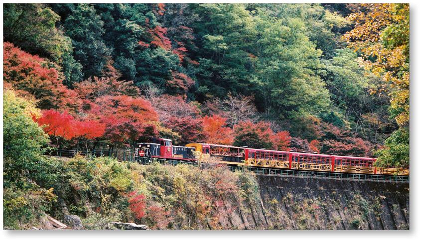 保津川沿いの自然や渓谷美を楽しむ「トロッコ列車」