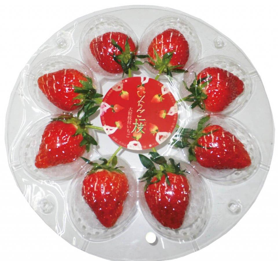 サクランボ感覚でイチゴ(大粒のやよいひめ)をつまみながら味わってもらおうと、通常捨てられる枝を残しているのが特徴の「いちご一枝」。ネーミングも素敵