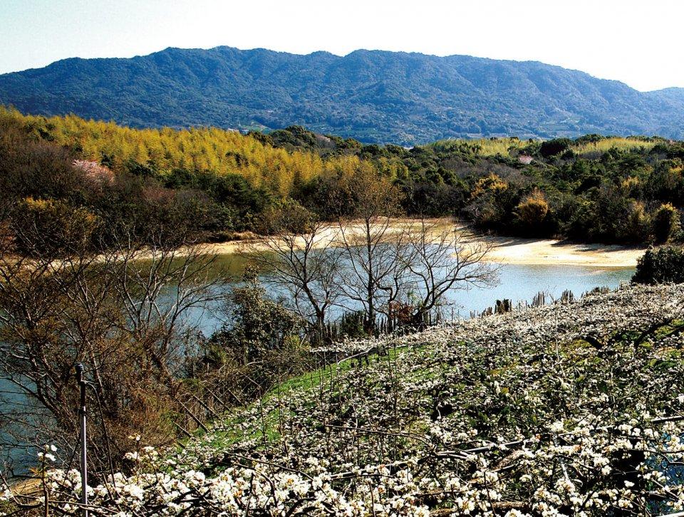小岱山:荒尾市と玉名市にまたがっている山。丸山 392m、観音岳 473m、筒ヶ岳 501m などからなる