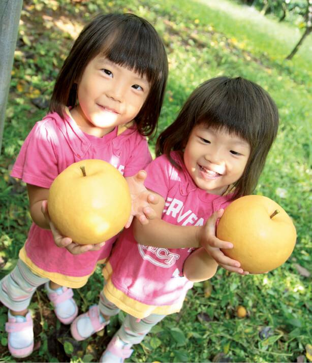 """荒尾梨:品種は""""新高(にいたか)""""。昭和初期から栽培され、荒尾ジャンボ梨の名称で知られる。子どもの頭ほどの大きさになる、大きい・甘い・おいしいの三拍子そろった梨"""