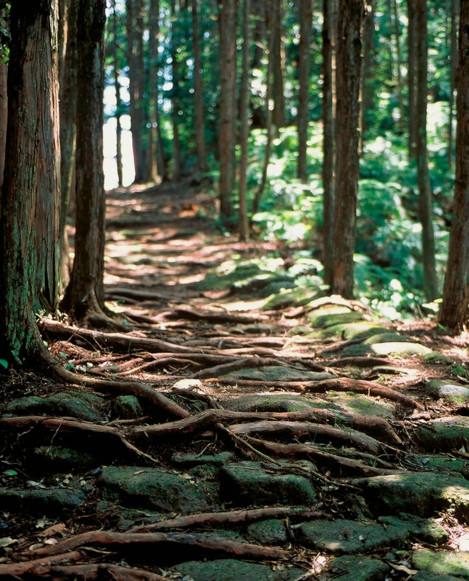 熊野古道伊勢路:ユネスコ世界遺産(文化遺産)