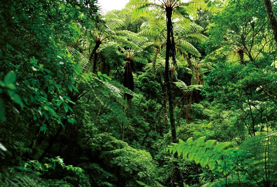 天然の亜熱帯広葉樹が多数残っている金作原原生林