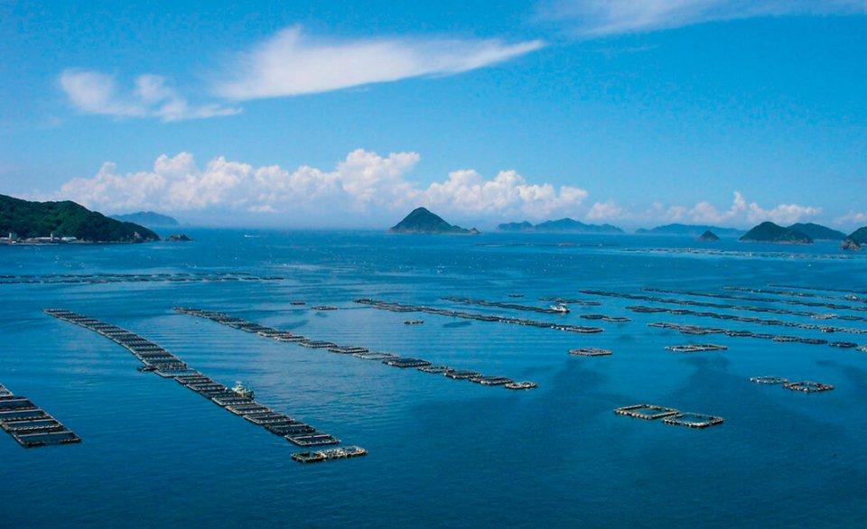 ハマチ養殖いかだ:リアス式海岸で入り江が多い宇和海では養殖業が盛ん