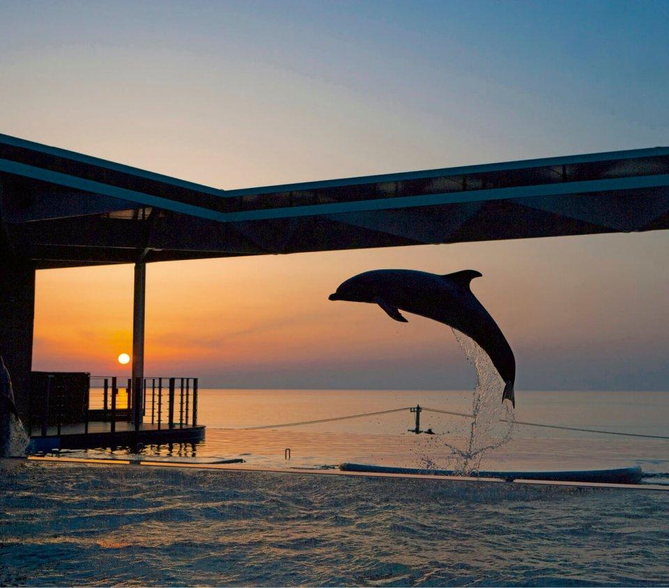 大水槽と日本海の水面が一体となった水族博物館「うみがたり」
