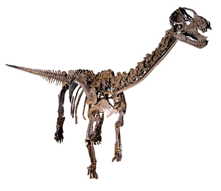 カマラサウルスの実物全身骨格(全長約15m、高さ約6m)は看板展示物の一つだ