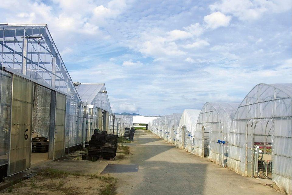 本社農場は18000㎡、施設面積12000㎡。他に大分県九重町にも農場を有し、年間出荷数量は350万ポット、カットパック苗200万本を誇る