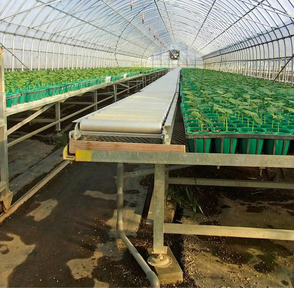 商品である植物をベンチで高くし、横に付いていた灌水(かんすい)スプリンクラーも土砂が詰まらないよう天井からつり下げた