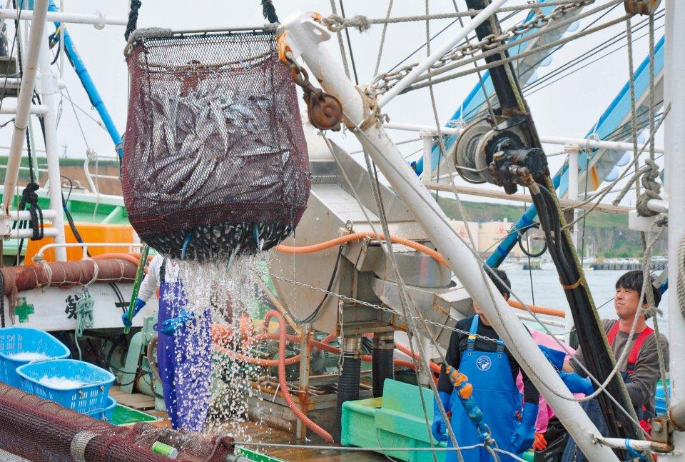 サンマ水揚げ:9月~11月が旬。脂ののった「とろさんま」は絶品