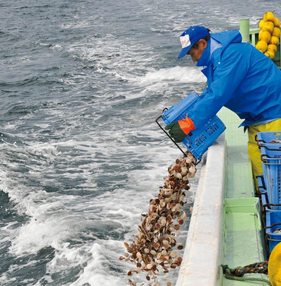 ホタテの稚貝放流:ふるさと納税も一部活用している沿岸漁業資源の維持・増大活動