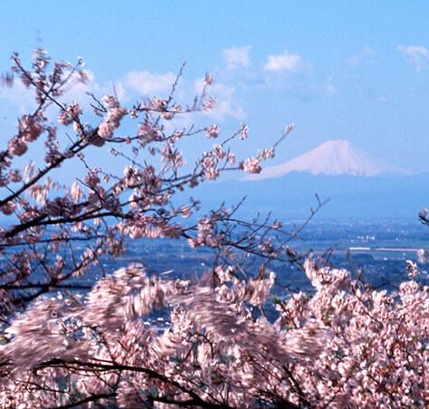 謙信平から富士山を望む