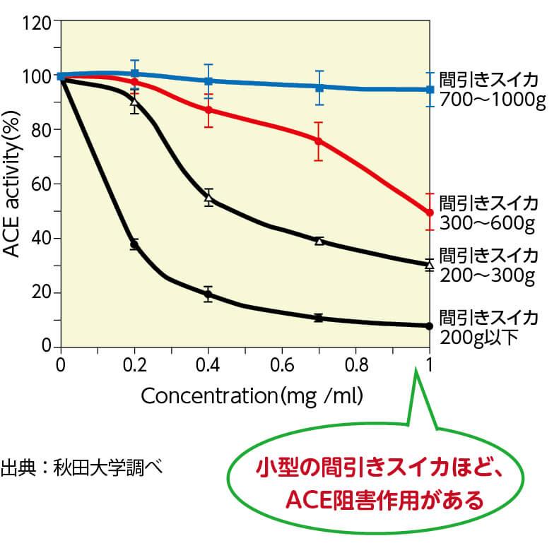小型の間引きスイカほど、ACE阻害作用がある