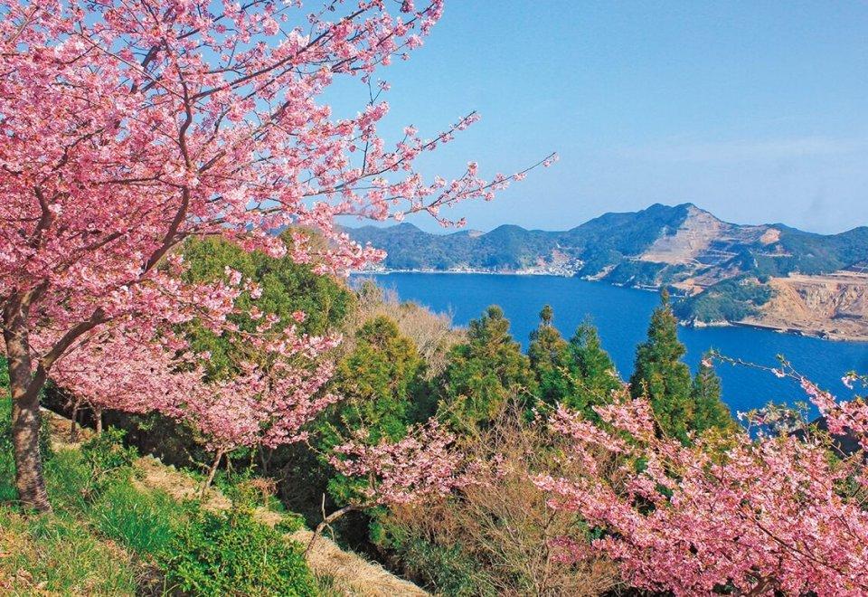 河津桜賞「河津桜と海-1」