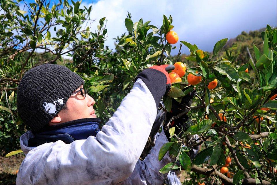 農薬は6割削減し、有機肥料のみを使い、手作業での栽培を行っている