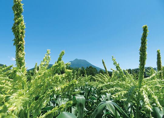 標高400〜500mに位置する広大な畑で糖度18%以上の甘さにこだわって育てている