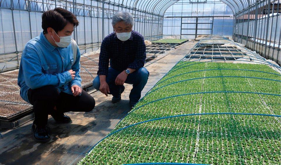 事業発足後10日で、レタス農家にマッチングが決まった旅館従業員(左)